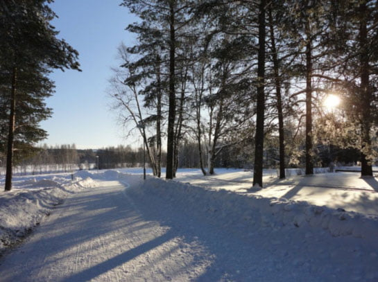 Camino que llevaba desde la Universidad a las casas de los Erasmus