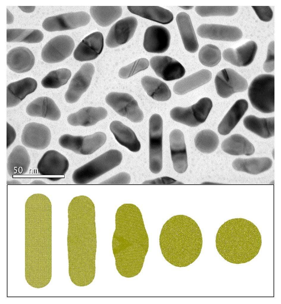 Nano-palitos de oro modificados por medio de pulsos láser ultracortos (arriba) y simulación por ordenador del proceso (abajo)